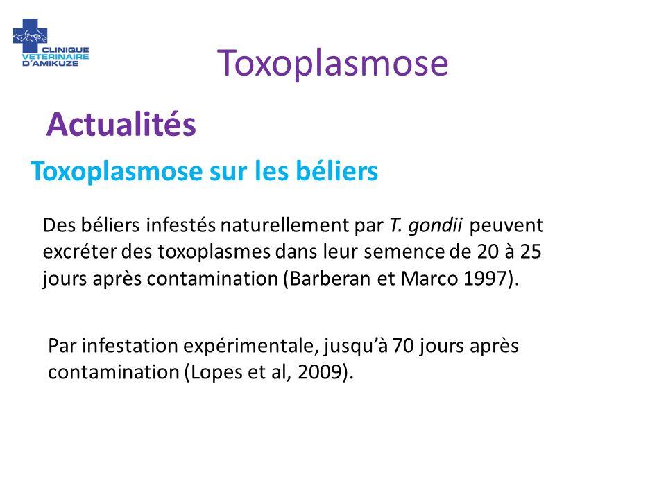 Toxoplasmose Actualités Toxoplasmose sur les béliers
