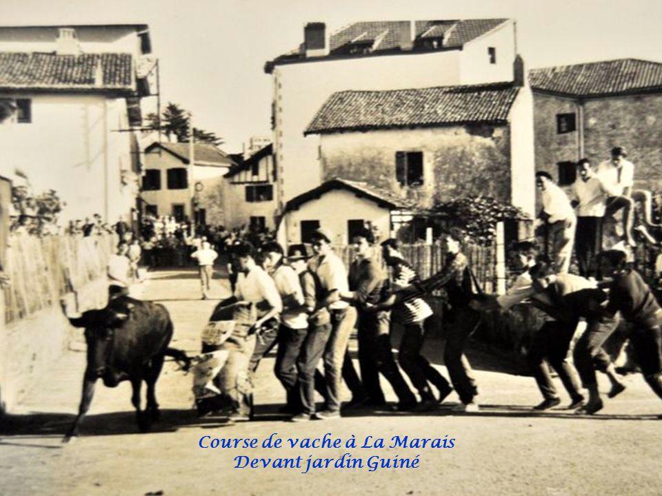 Course de vache à La Marais