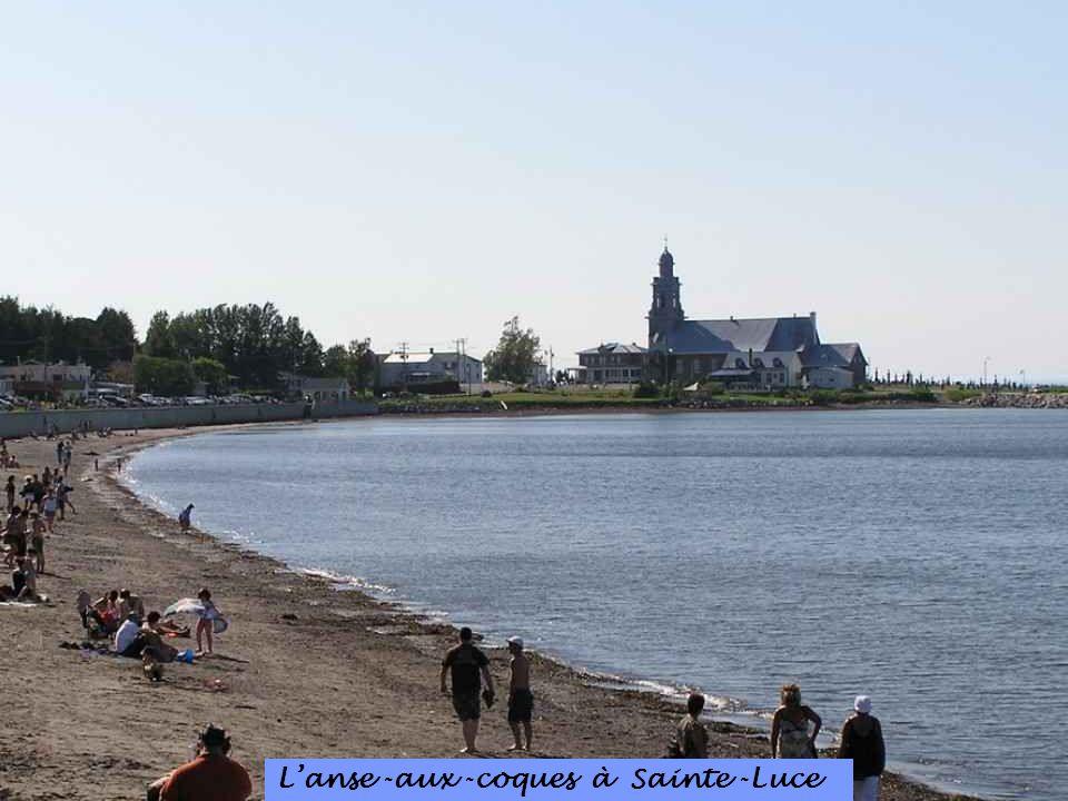 L'anse -aux -coques à Sainte -Luce