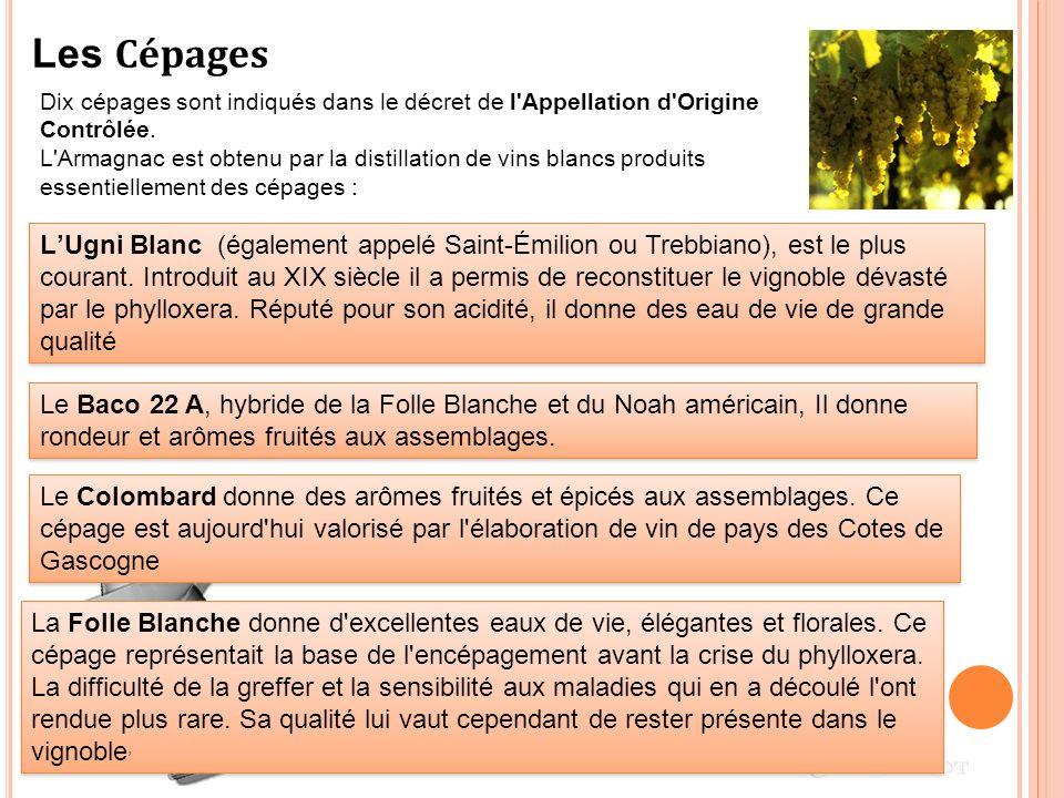 Les Cépages Dix cépages sont indiqués dans le décret de l Appellation d Origine Contrôlée.