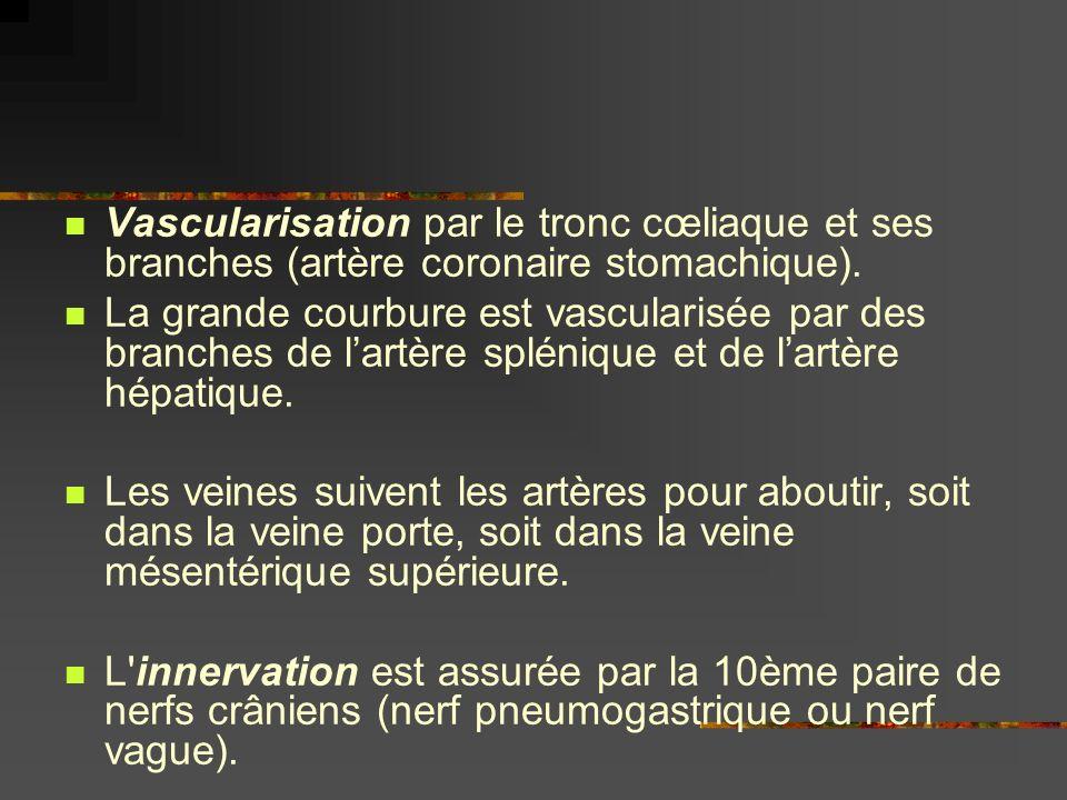 Vascularisation par le tronc cœliaque et ses branches (artère coronaire stomachique).