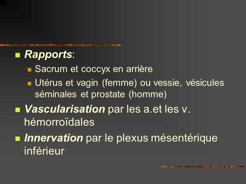 Vascularisation par les a.et les v. hémorroïdales
