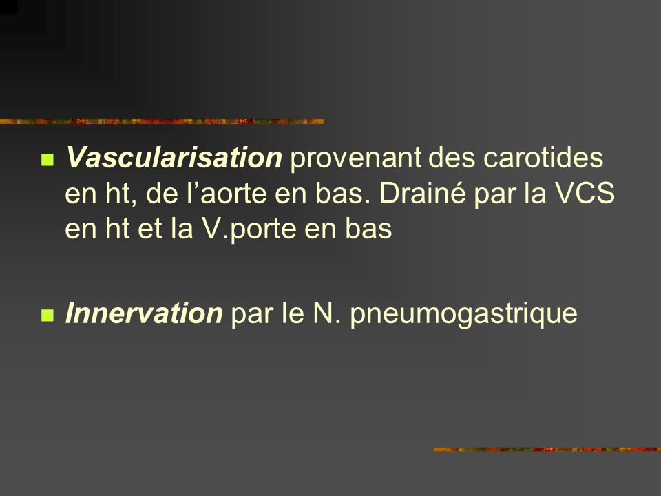 Vascularisation provenant des carotides en ht, de l'aorte en bas