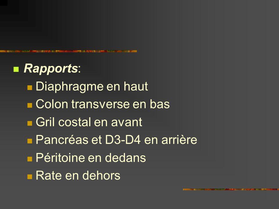 Rapports: Diaphragme en haut. Colon transverse en bas. Gril costal en avant. Pancréas et D3-D4 en arrière.