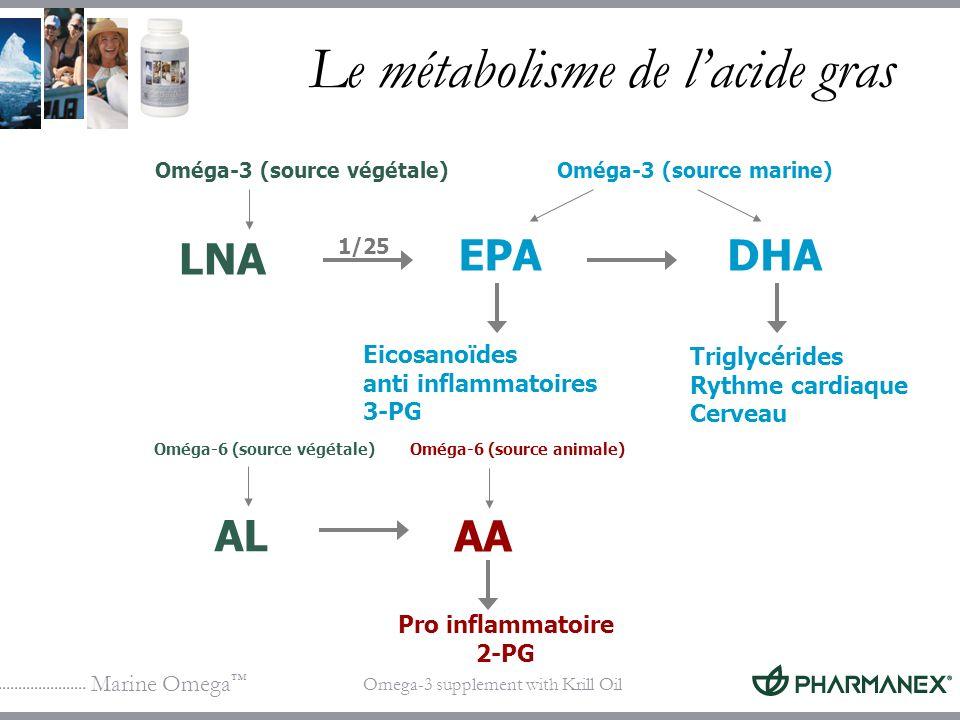 Le métabolisme de l'acide gras