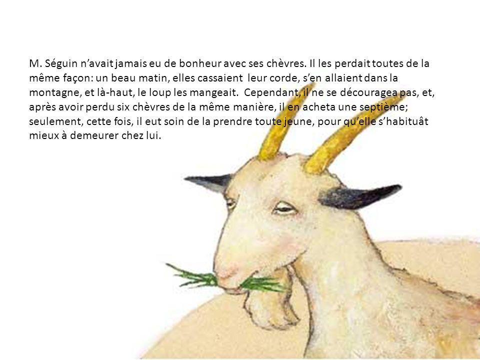 M. Séguin n'avait jamais eu de bonheur avec ses chèvres