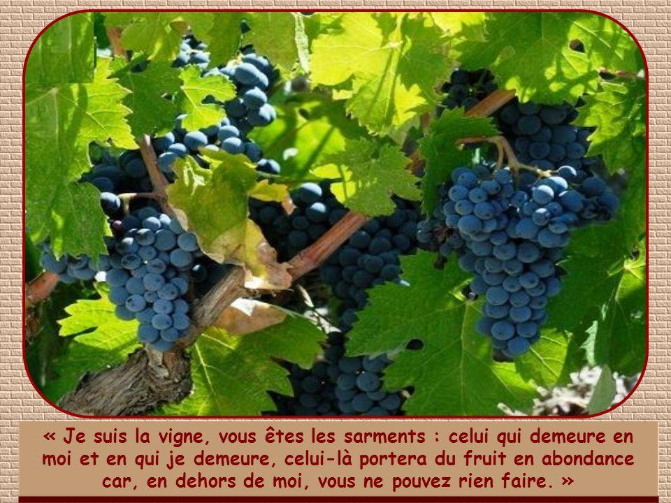 « Je suis la vigne, vous êtes les sarments : celui qui demeure en moi et en qui je demeure, celui-là portera du fruit en abondance car, en dehors de moi, vous ne pouvez rien faire. »