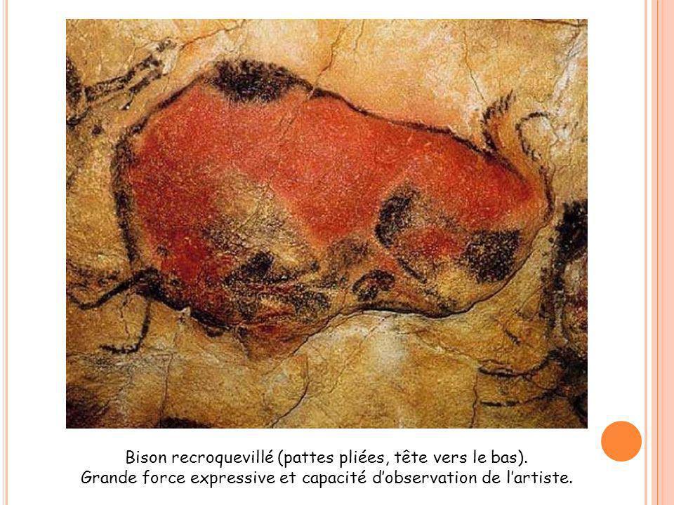 Bison recroquevillé (pattes pliées, tête vers le bas).