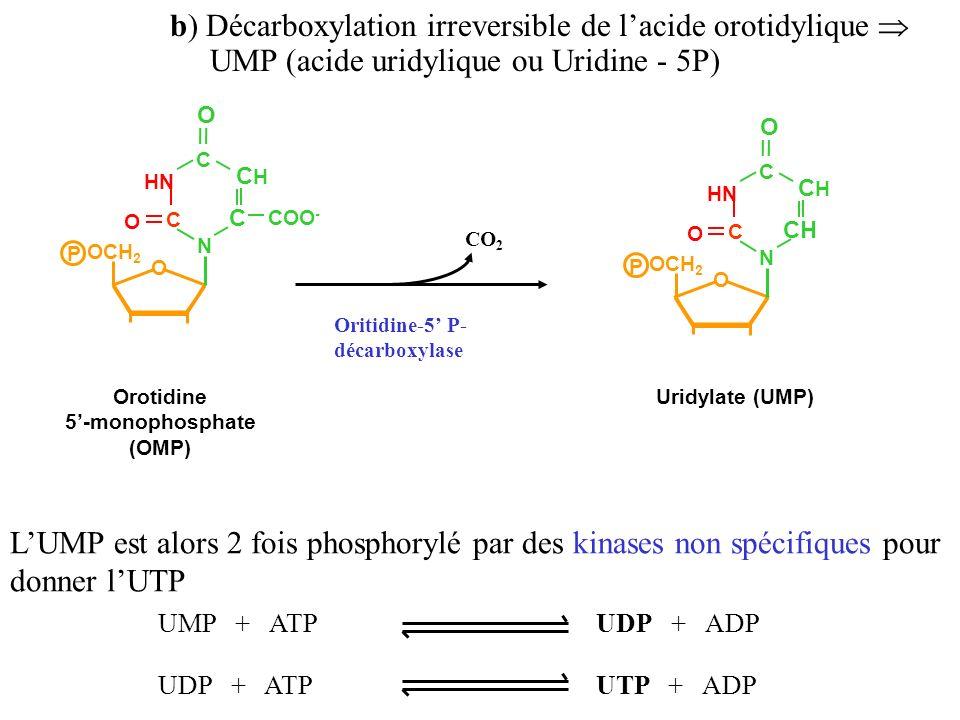 b) Décarboxylation irreversible de l'acide orotidylique 