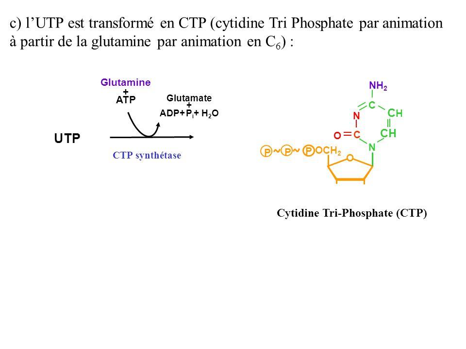 c) l'UTP est transformé en CTP (cytidine Tri Phosphate par animation à partir de la glutamine par animation en C6) :