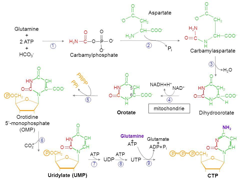 Aspartate Glutamine + 2 ATP HCO3- Pi Carbamylaspartate
