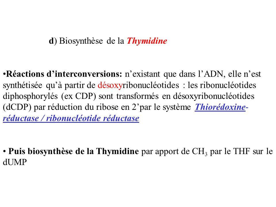 d) Biosynthèse de la Thymidine