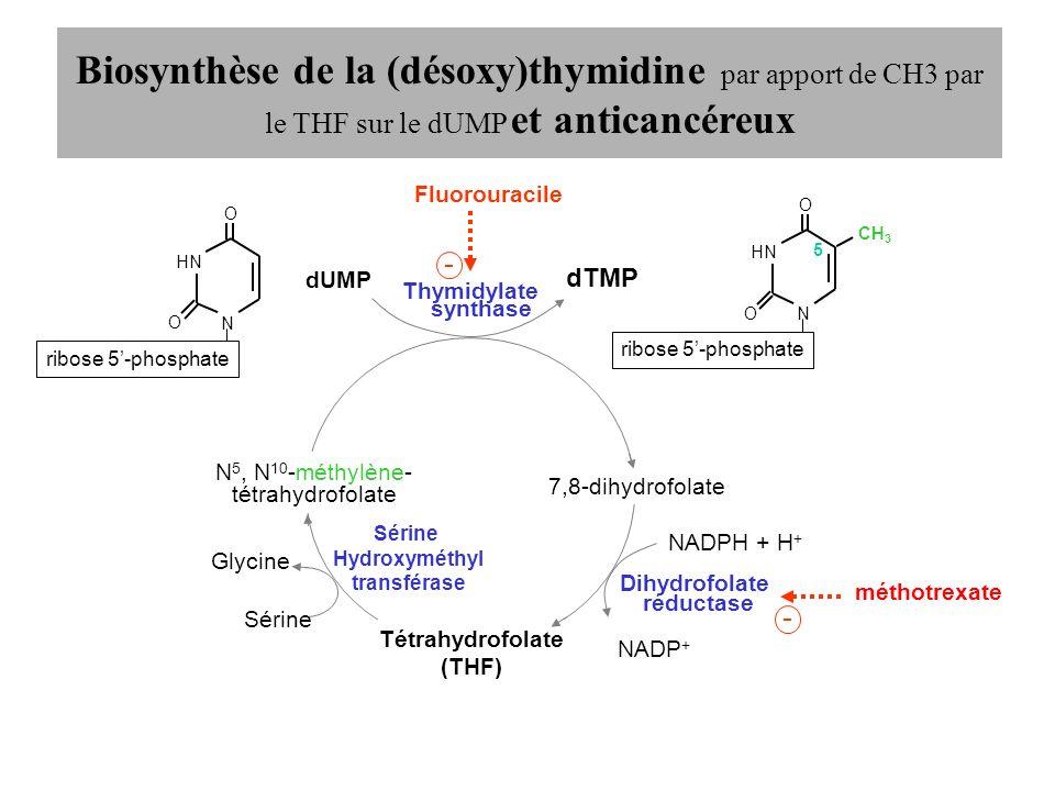 Biosynthèse de la (désoxy)thymidine par apport de CH3 par le THF sur le dUMP et anticancéreux