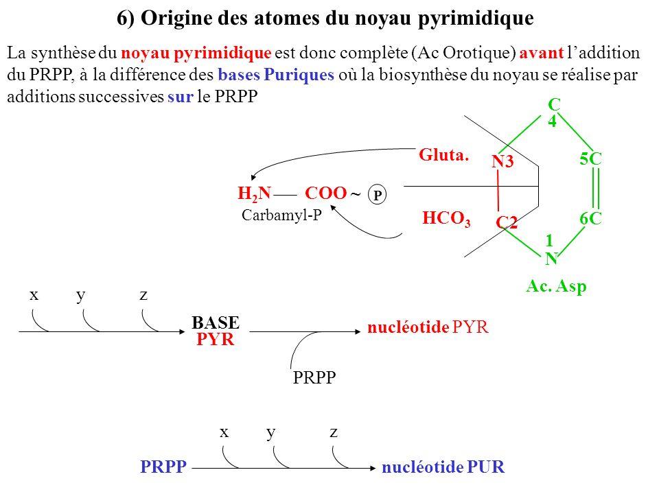6) Origine des atomes du noyau pyrimidique