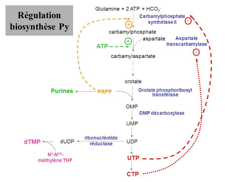 Régulation biosynthèse Py