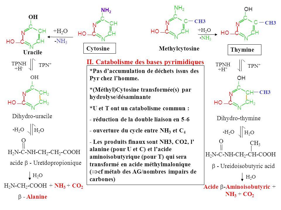 Acide -Aminoisobutyric + NH3 + CO2