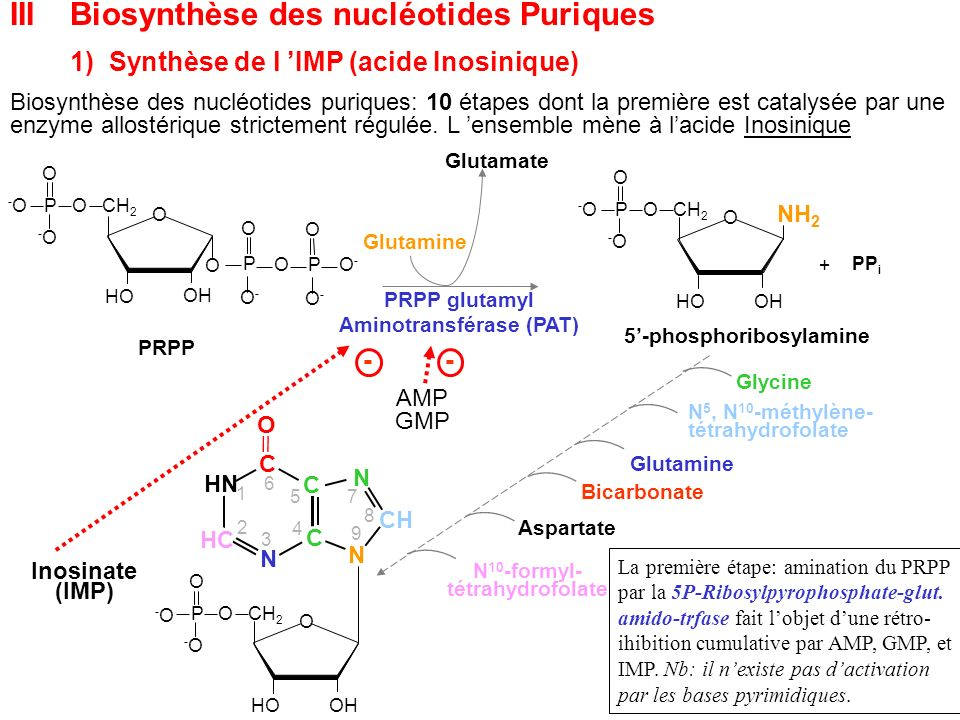 5'-phosphoribosylamine