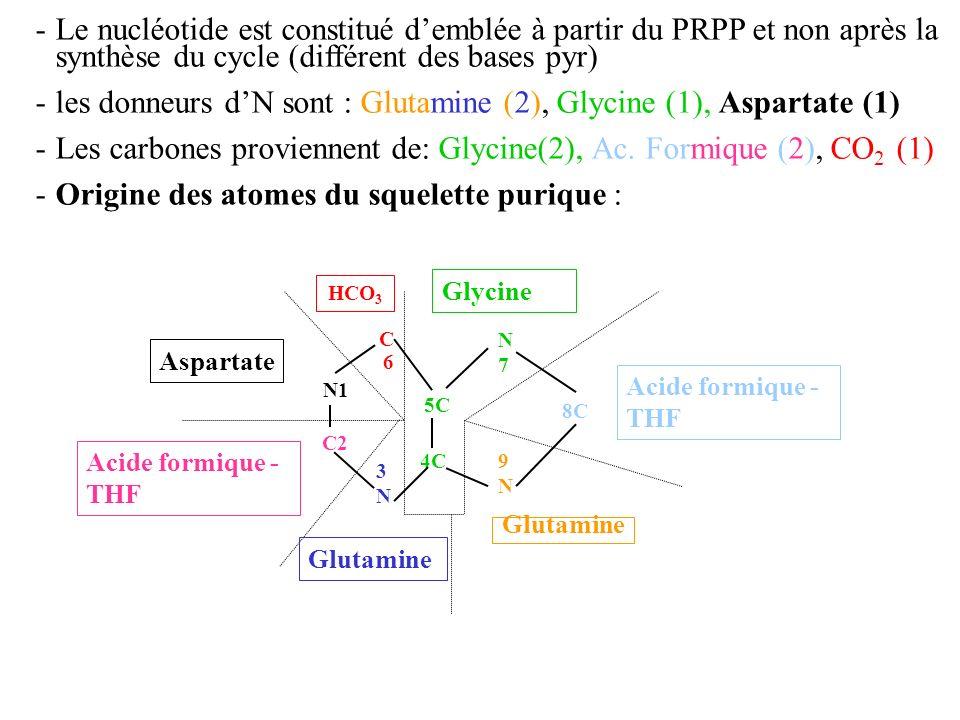 - les donneurs d'N sont : Glutamine (2), Glycine (1), Aspartate (1)