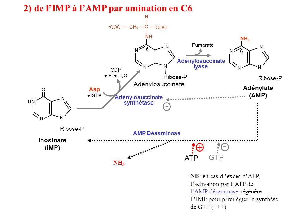 2) de l'IMP à l'AMP par amination en C6