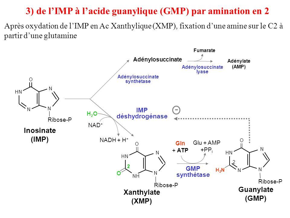 3) de l'IMP à l'acide guanylique (GMP) par amination en 2