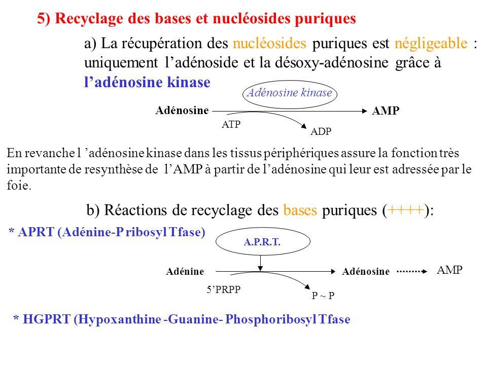 5) Recyclage des bases et nucléosides puriques