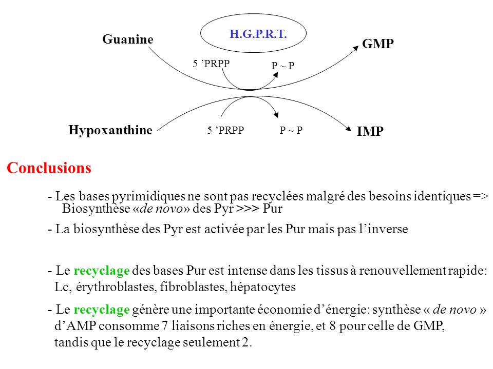 Conclusions Guanine GMP Hypoxanthine IMP