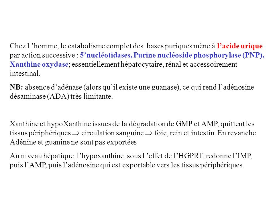 Chez l 'homme, le catabolisme complet des bases puriques mène à l'acide urique par action successive : 5'nucléotidases, Purine nucléoside phosphorylase (PNP), Xanthine oxydase; essentiellement hépatocytaire, rénal et accessoirement intestinal.