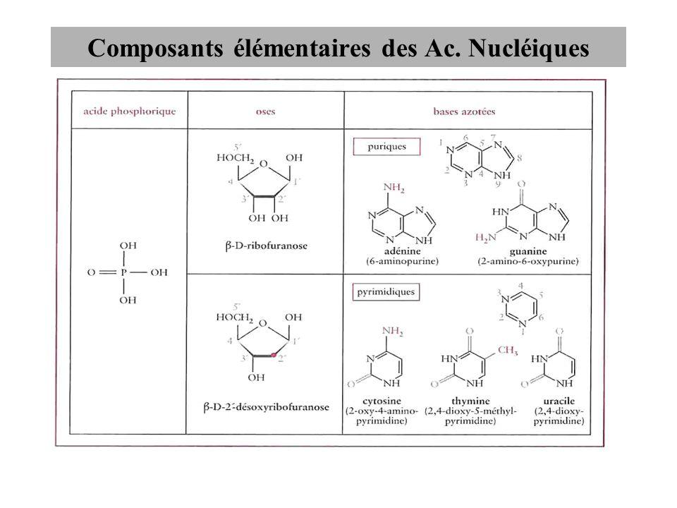 Composants élémentaires des Ac. Nucléiques
