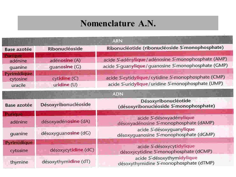Nomenclature A.N.