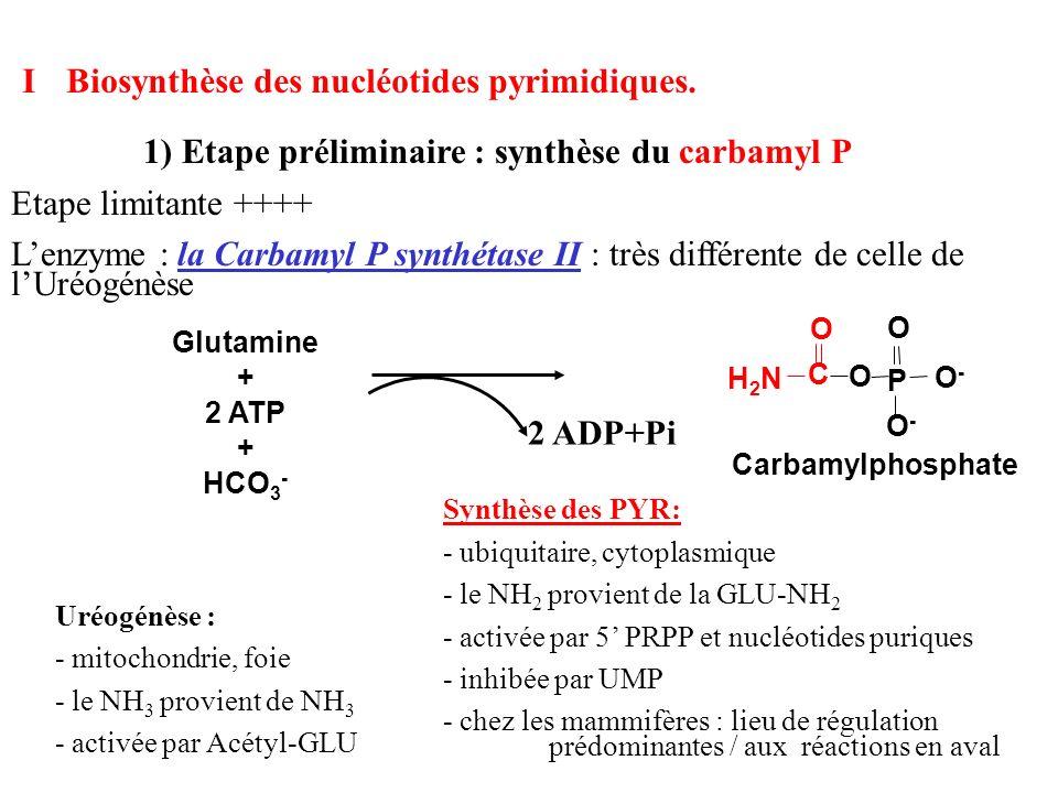 I Biosynthèse des nucléotides pyrimidiques.