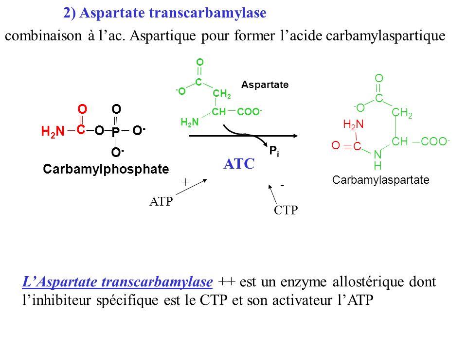 2) Aspartate transcarbamylase