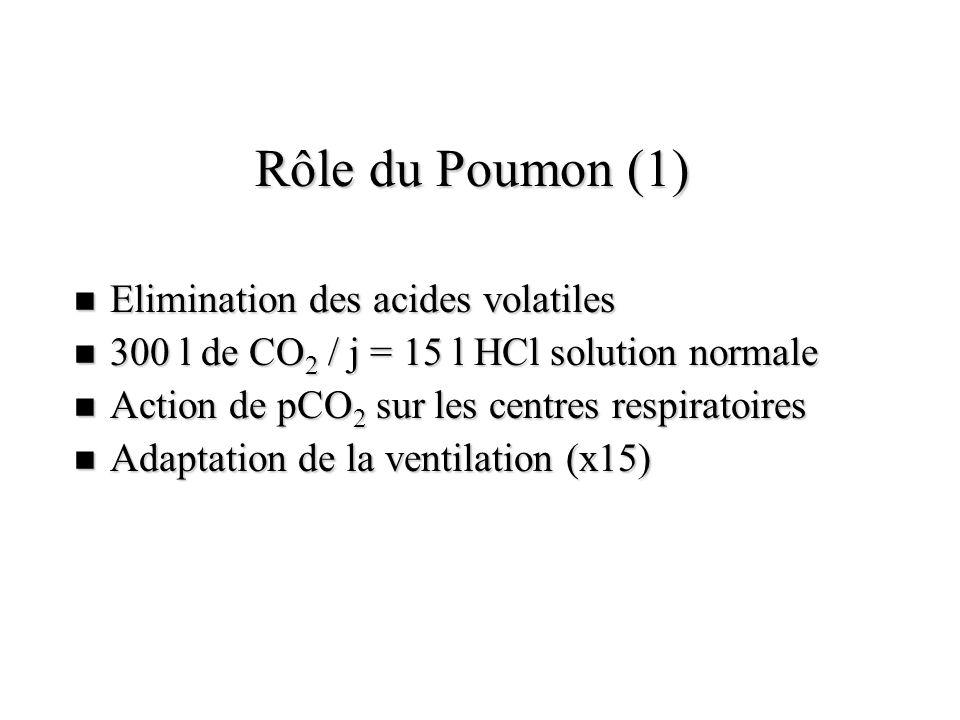 Rôle du Poumon (1) Elimination des acides volatiles