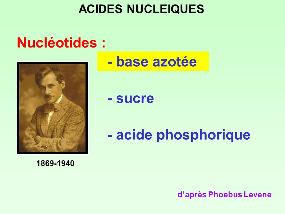 Nucléotides : - base azotée - sucre - acide phosphorique