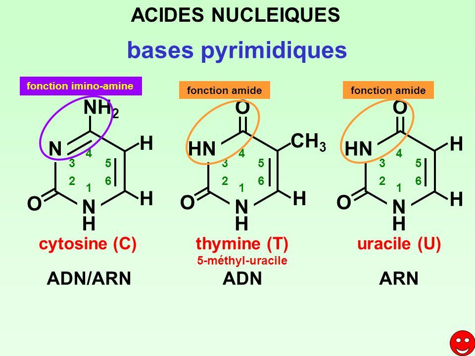 bases pyrimidiques ACIDES NUCLEIQUES N H NH2 HN O CH3 ADN/ARN ADN ARN