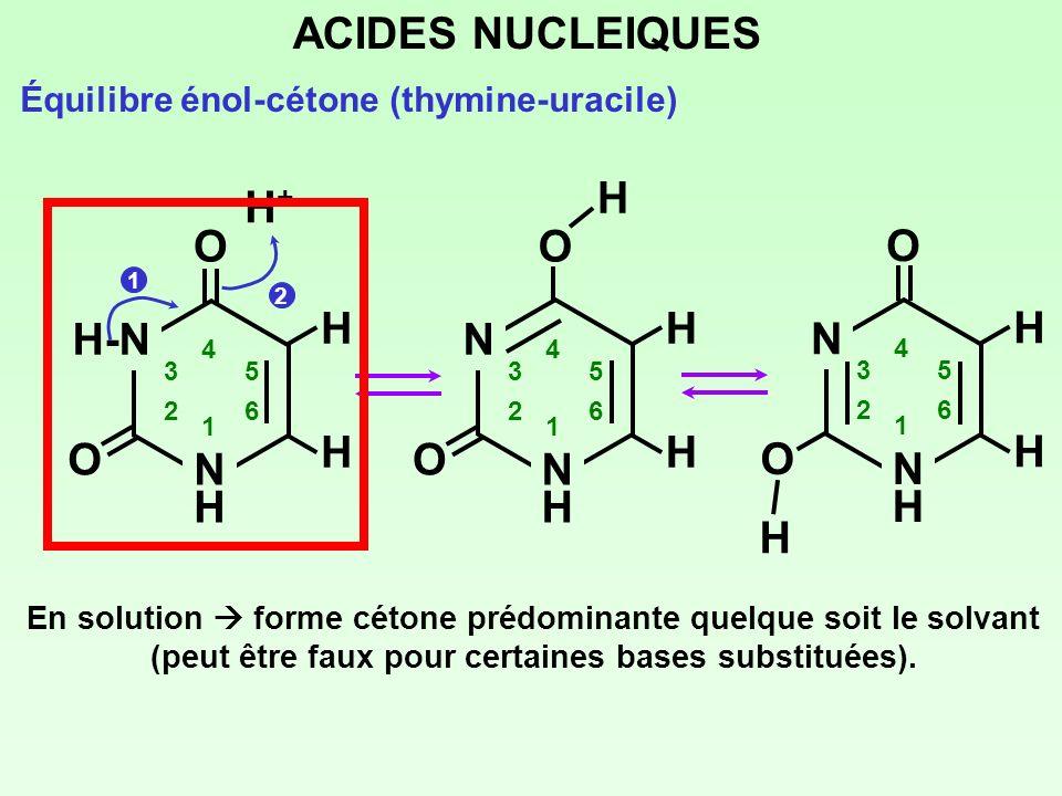ACIDES NUCLEIQUES N H O H+ O H H-N H O N H