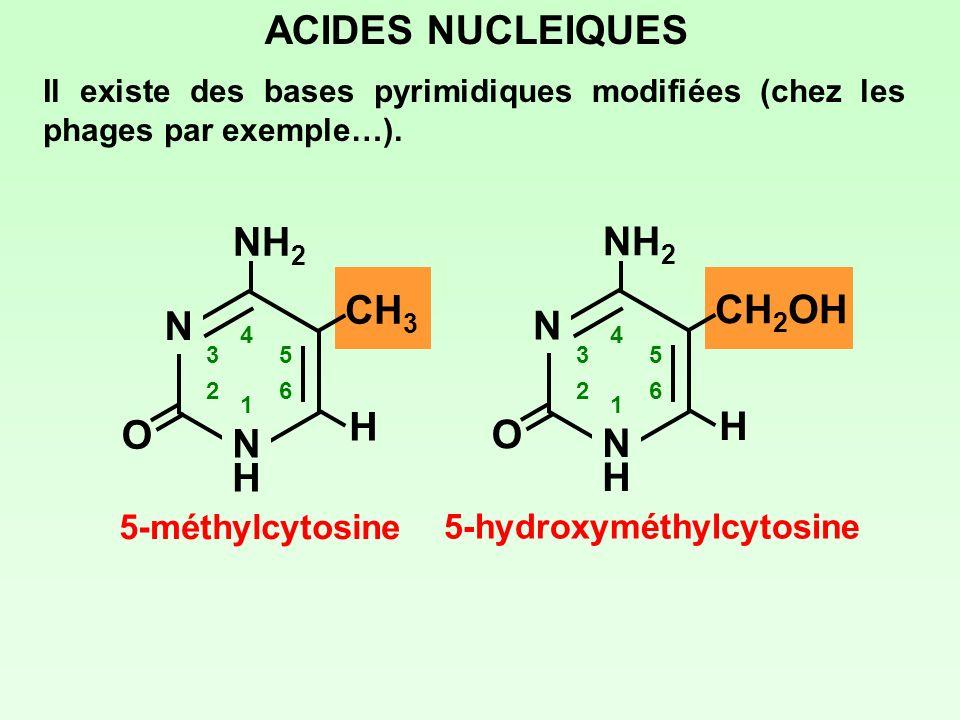 ACIDES NUCLEIQUES NH2 NH2 CH3 CH2OH N N H H O O N H N H