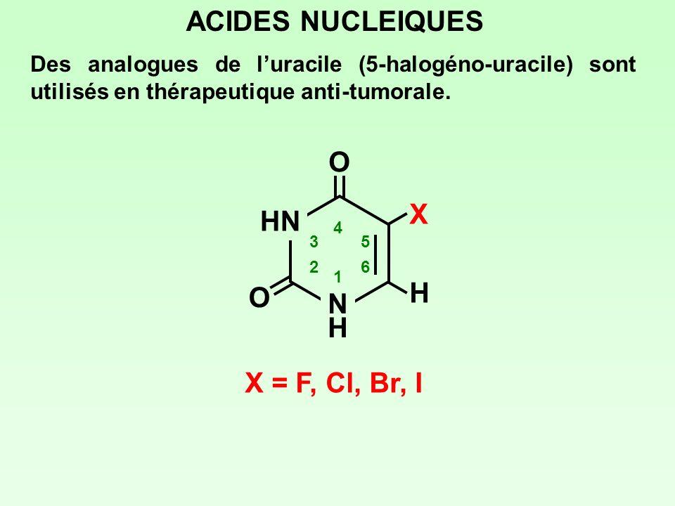 ACIDES NUCLEIQUES O X HN H O N H X = F, Cl, Br, I
