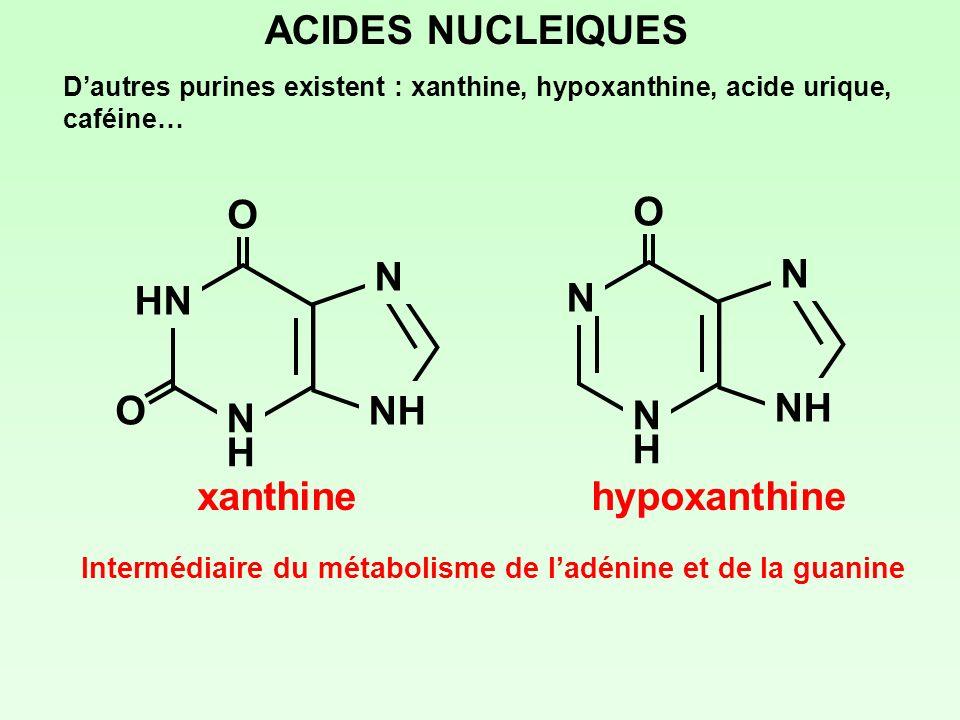 Intermédiaire du métabolisme de l'adénine et de la guanine