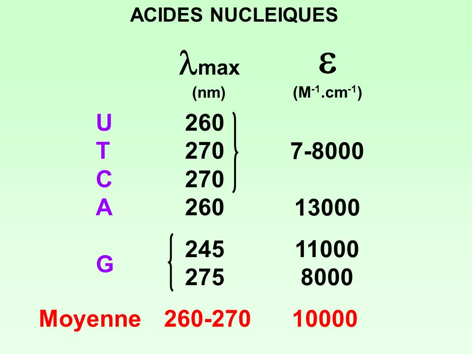 ACIDES NUCLEIQUES lmax. (nm) e. (M-1.cm-1) U. T C A. G. 260. 270. 245. 275. 7-8000. 13000.