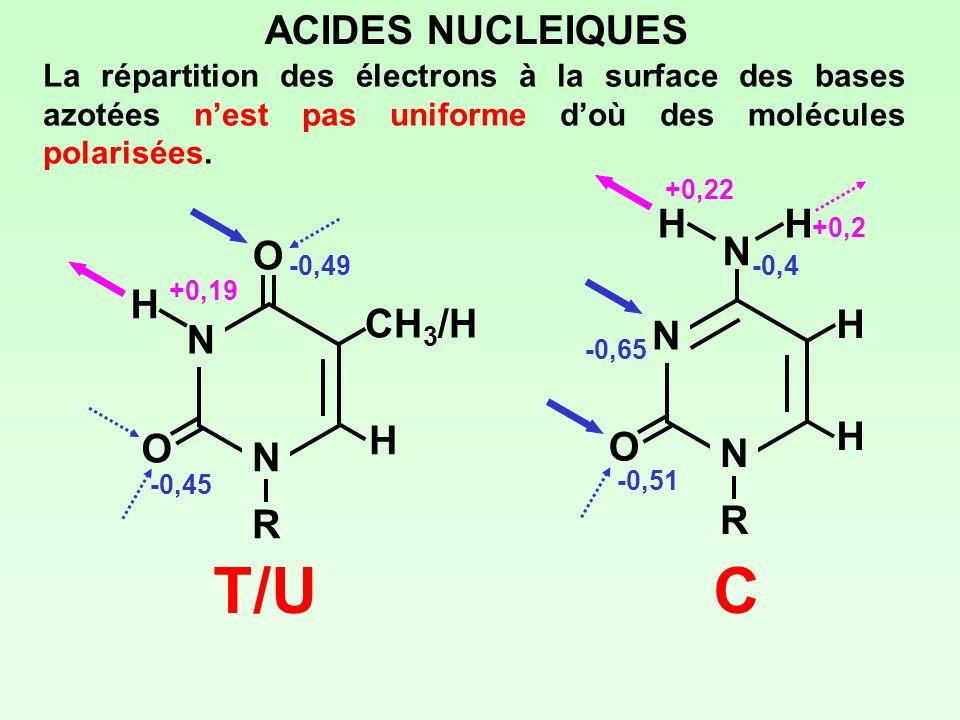 C T/U ACIDES NUCLEIQUES H O CH3/H N N H O R R