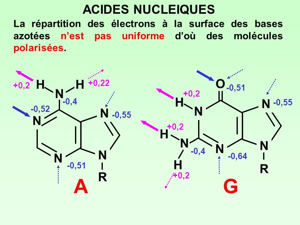 A G ACIDES NUCLEIQUES H O N H N R R