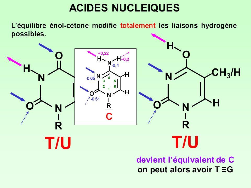 T/U ACIDES NUCLEIQUES O CH3/H N H R devient l'équivalent de C