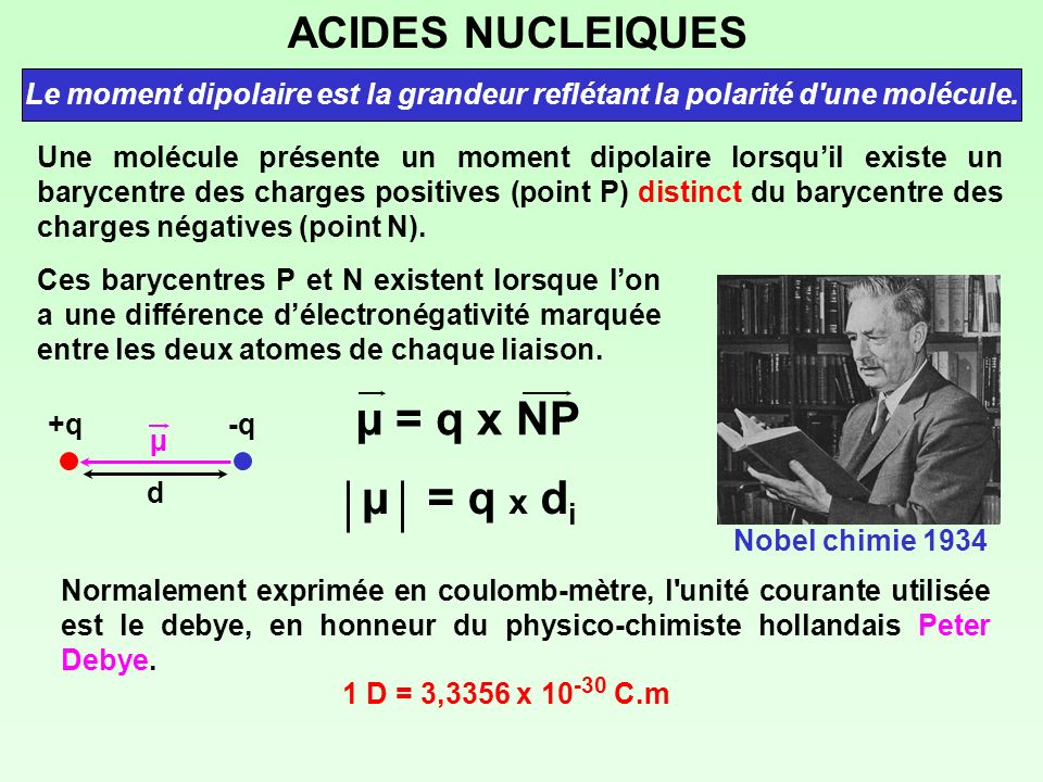 µ = q x NP µ = q x di ACIDES NUCLEIQUES