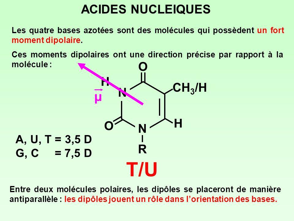 T/U µ ACIDES NUCLEIQUES O CH3/H N H R A, U, T = 3,5 D G, C = 7,5 D