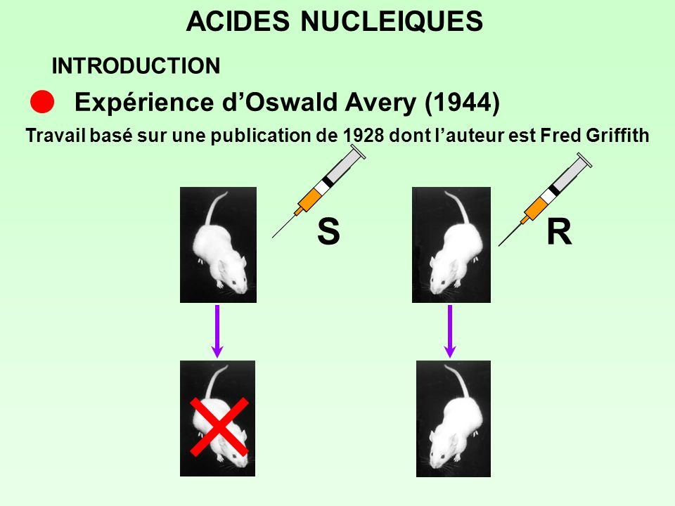 S R ACIDES NUCLEIQUES Expérience d'Oswald Avery (1944) INTRODUCTION