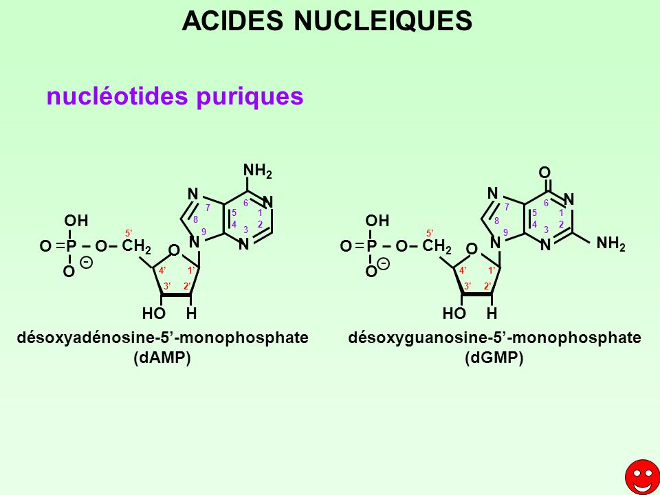 désoxyadénosine-5'-monophosphate désoxyguanosine-5'-monophosphate