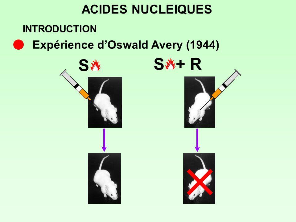 S S + R ACIDES NUCLEIQUES Expérience d'Oswald Avery (1944)