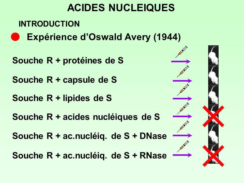 ACIDES NUCLEIQUES Expérience d'Oswald Avery (1944)