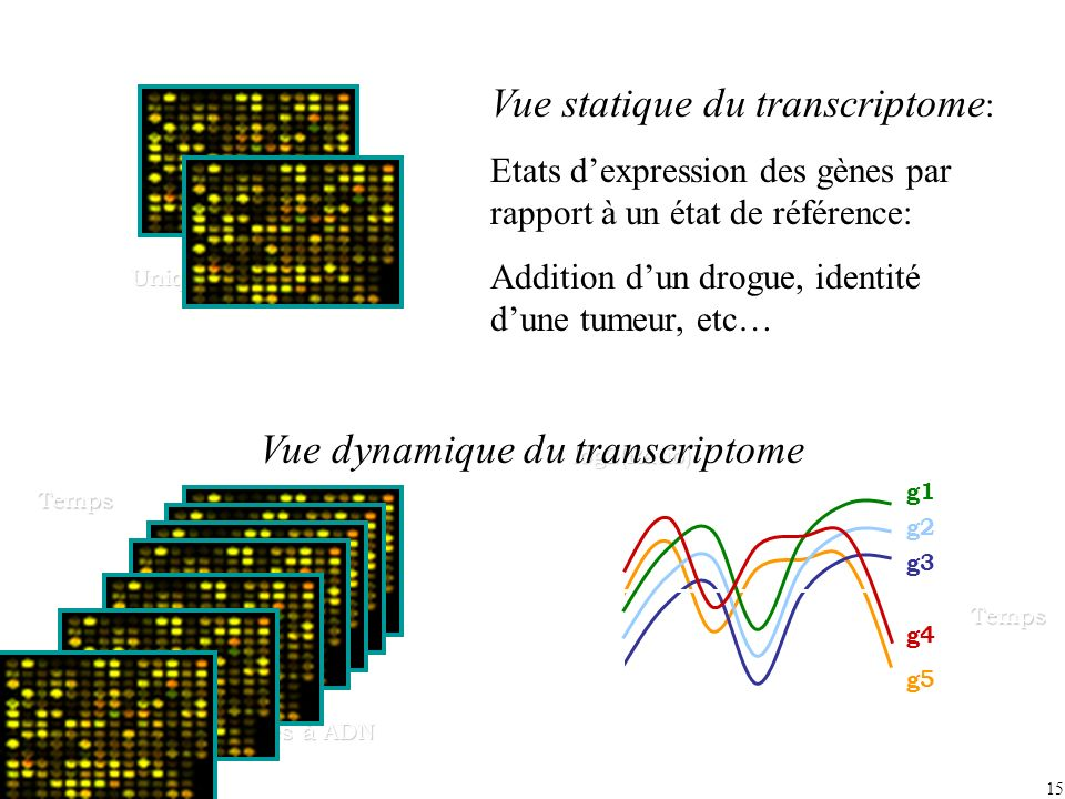 Vue statique du transcriptome:
