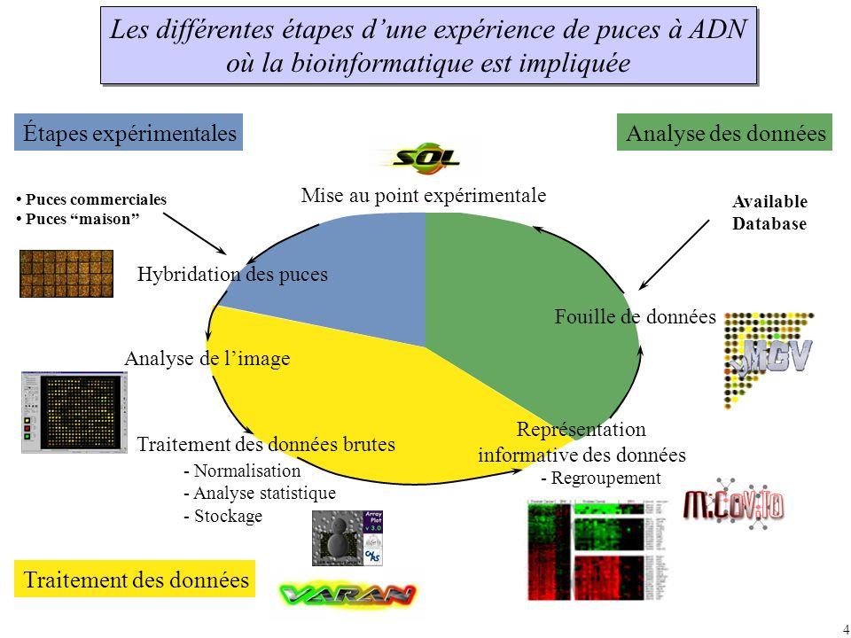 Les différentes étapes d'une expérience de puces à ADN